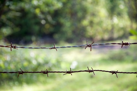 Old barbed wire Stock Photo - 22123403