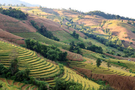 Green Terraced Rice Field photo