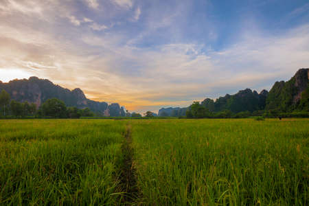 Landscape. Mountain with green rice field during sunset in Phitsanulok,Thailand  photo