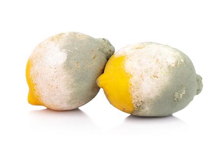 moldy lemon citrus fruit isolated on white background