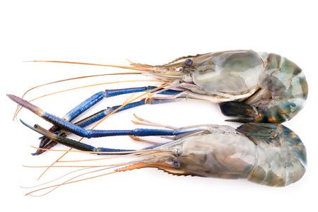 Giant freshwater prawn, Fresh shrimp isolate on white background photo