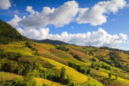 Green Terraced Rice Field at Ban Pa Bong Peay in Chiangmai, Thailand photo