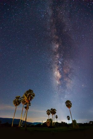 Silhouette of Sugar Plam Tree and Milky Way photo