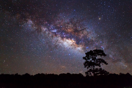 Silhouette of Tree and Milky Way photo
