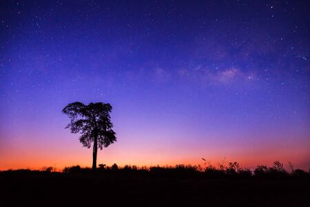 vulpecula: Beautiful Silhouette of Tree and Milky Way