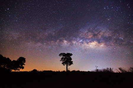 vulpecula: Silhouette of Tree and Milky Way in Khao-kho Phetchabun,Thailand