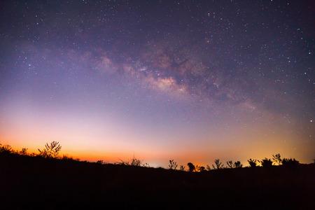 cielo estrellado: Silueta de árbol y la Vía Láctea