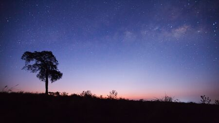 vulpecula: Silhouette of Tree and Milky Way, Long exposure photograph