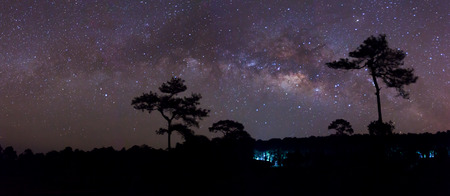 vulpecula: The Panorama  silhouette of Tree and Milky Way galaxy, Long exposure photograph Stock Photo