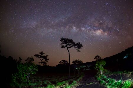 silhouette of Tree  and Milky Way. Long exposure photograph. photo
