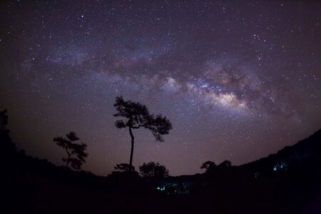 vulpecula: Silhouette of tree and Milky Way. Long exposure photograph.