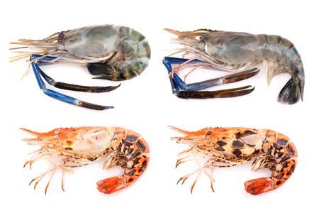 rosenbergii: Giant freshwater prawn, Fresh shrimp isolate on white background