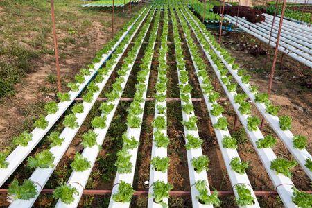 hydroponic: Organic hydroponic vegetable garden Stock Photo