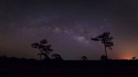 vulpecula: Panorama silhouette of pine tree with cloud and Milky Way. Long exposure photograph.