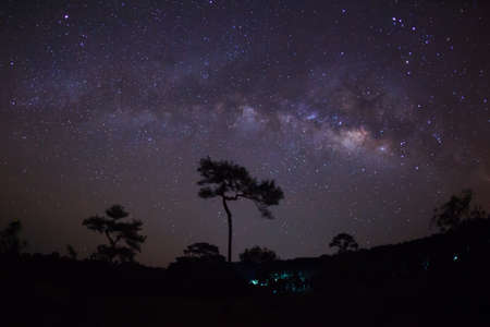 vulpecula: Silhouette of Tree with cloud and Milky Way. Long exposure photograph. Stock Photo