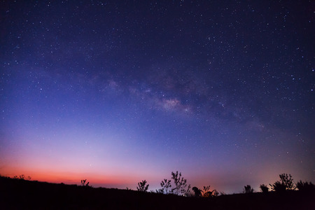 milkyway: Silhouette of tree and beautiful milkyway on a night sky. Long exposure photograph.