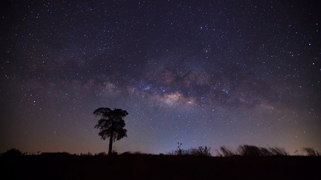 vulpecula: Silhouette of tree and beautiful milkyway on a night sky. Long exposure photograph.