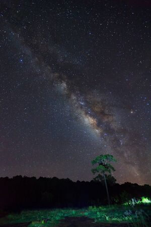 vulpecula: Silhouette of tree with cloud and beautiful milkyway on a night sky. Long exposure photograph.
