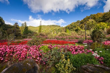 Flower garden with blue sky Stock Photo