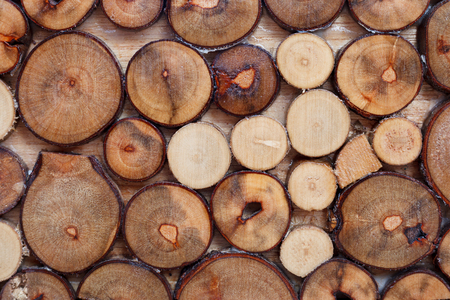 pile of logs: real wood logs pile background Stock Photo