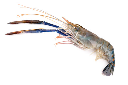 macrobrachium: Fresh shrimp, Giant freshwater prawn on white