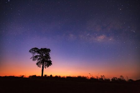 milkyway: Before sunrise milkyway and silhouette of tree. Long exposure photograph. Stock Photo
