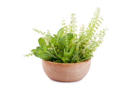 basil: part of holy basil pile in bowl
