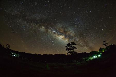 vulpecula: Silhouette of Tree and Milky Way at Phu Hin Rong Kla National Park,Phitsanulok Thailand .Long exposure photograph.With grain