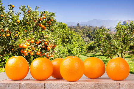 Fresh orange on wood table in garden Stock Photo