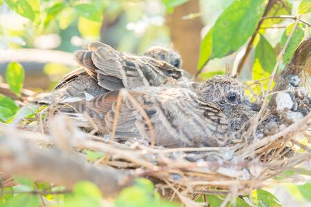 baby bird on nest in the nature and sun Stock Photo
