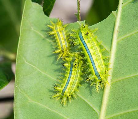 green worm on a stick in nature Reklamní fotografie