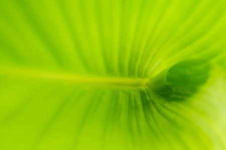 Green banana leaf pattern
