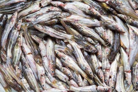 Fresh food Local freshwater fish Prepared food Reklamní fotografie