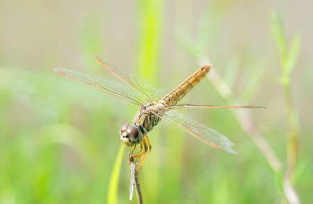 dragonfly in nature Reklamní fotografie