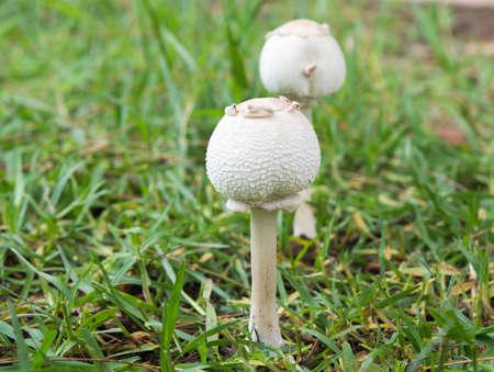 toadstools on  Forest lawn Reklamní fotografie