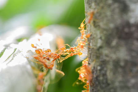 Ants on green leaves and eat food Banco de Imagens