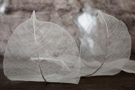Close up of leaf skeleton in vintage tone