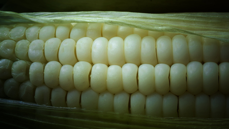 Close up of white corn