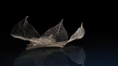 Close up of leaf skeleton and reflection on the floor in vintage tone