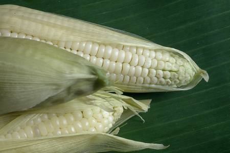 Close up of white corn on banana leaf 版權商用圖片