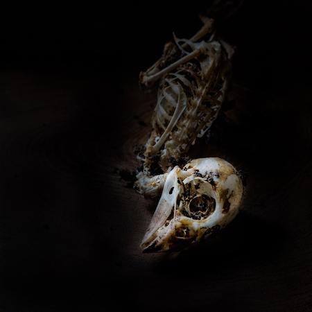 Closeup of sparrow skull in dark
