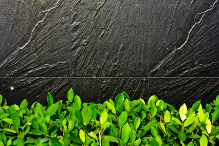 forground: Black stone wall with green leaf in forground Stock Photo