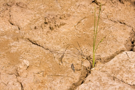 Plant in Dry brown soil  Stock Photo - 10303708