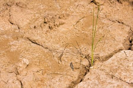Plant in Dry brown soil Stock Photo - 10303708
