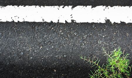 Texture closeup of an asphalt road with painted white line on the side with grass Stock Photo - 10410380