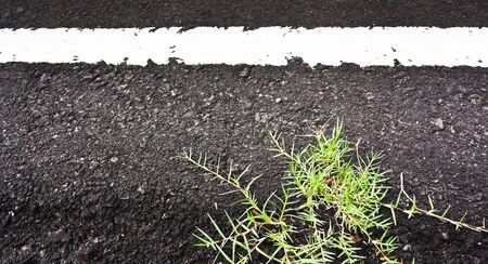 Texture closeup of an asphalt road with painted white line on the side with grass photo
