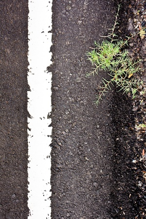 Texture closeup of an asphalt road with painted white line on the side with grass Stock Photo