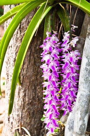 Orchid growing on tree photo
