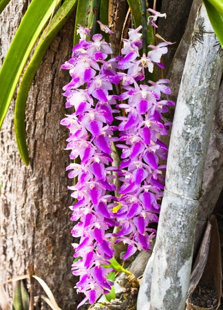 Orchid growing on tree Stock Photo