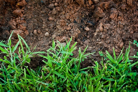 Green grass with earth  Stock Photo - 10534279